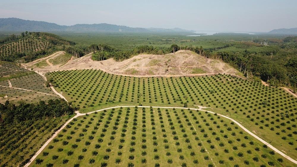 Ontbossing voor een palmolieplantage MVO - HASblog - HAS Hogeschool